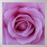 Pink Rose Centre