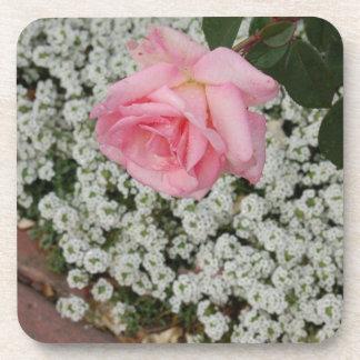 pink rose CP Zaz JPG Drink Coasters