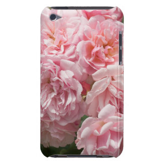 Pink Rose Felicia iPod Case-Mate Cases