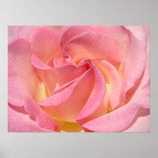 Pink Rose Flower Fine Art Prints Rose Spiral Posters