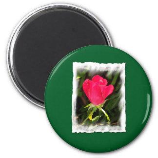 Pink Rose Flower Magnet