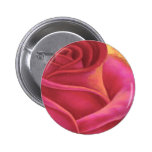 Pink Rose Flower Painting Art - Multi Button