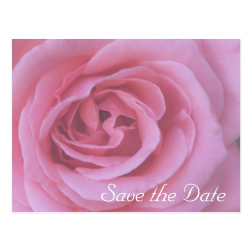 Pink Rose Flower Petals Save the Date Postcard