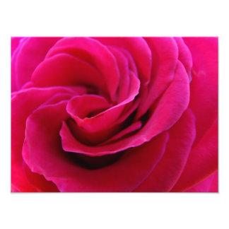 Pink Rose Flower Photography art prints Photo Art