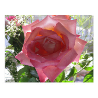 Pink Rose Flower Postcards