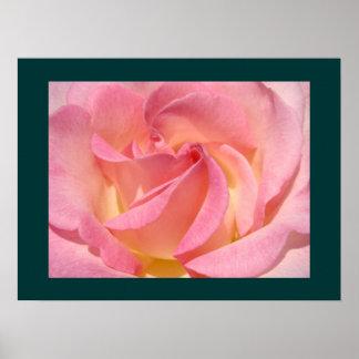 Pink Rose Flowers Fine Art Prints Floral Garden Print