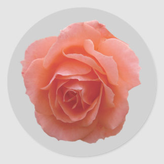 Pink Rose for You Round Sticker