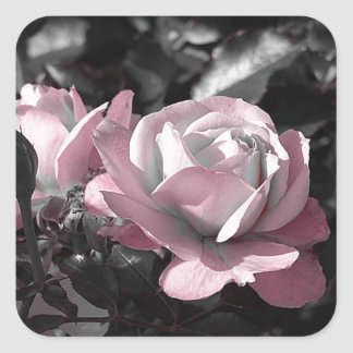 Pink Rose Garden Square Sticker