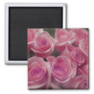 Pink rose group bunch photograph design refrigerator magnets