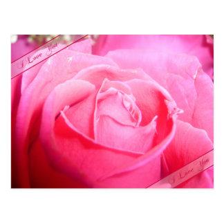 Pink Rose I Love You Postcard