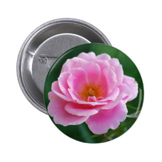 Pink rose in full bloom and meaning 6 cm round badge