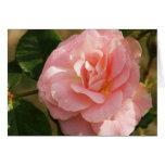 "Pink rose ""Jenny"" Greeting Cards"