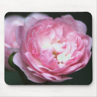 Pink Rose Mousepad! Mouse Pad
