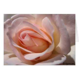 Pink Rose Note Cards Greeting Cards