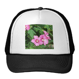 Pink Rose of Sharon Flowers with bee Hats