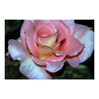Pink Rose on Canvas Print