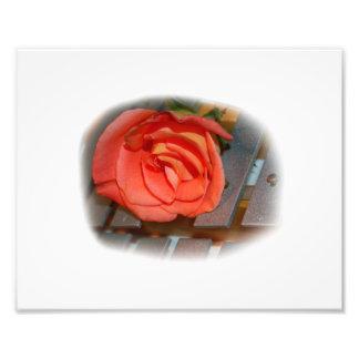 Pink Rose on Metal Mallet Bells Art Photo