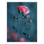 Pink Rose on Teal Poster