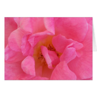 Pink Rose Petal Art  -  Theme Decorations Greeting Card