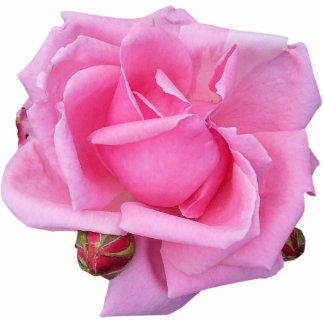 Pink Rose Photo Sculpture