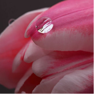Pink Rose Photo Sculpture Photo Cutout