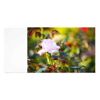 Pink Rose Red Thorn Customized Photo Card