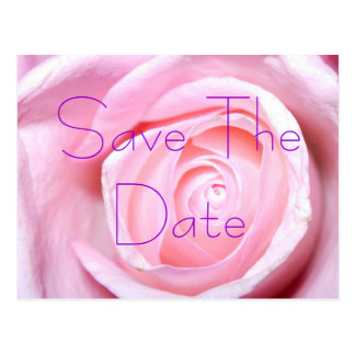 Pink Rose, Save The Date Postcard