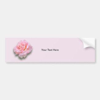 Pink Rose 'Scentsation' Bumper Sticker