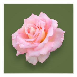 Pink Rose Scentsation Photo