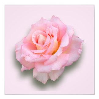Pink Rose Scentsation Photo Print