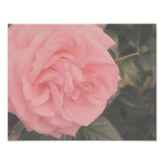 Pink Rose Shabby Chic Flower Floral Poster
