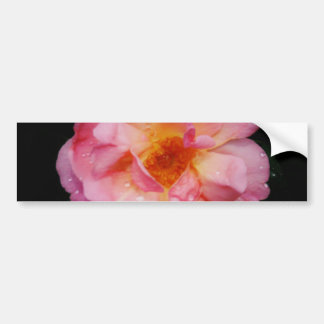 Pink Rose w Dew Drops Black Background Bumper Sticker