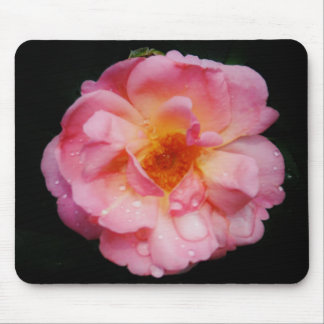 Pink Rose w/ Dew Drops Black Background Mouse Pad