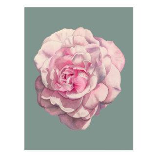 Pink Rose Watercolor Illustration Postcard
