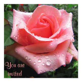 Pink Rose with Dew Invitation Card