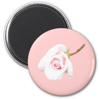 Pink Rose with rain drops Magnet