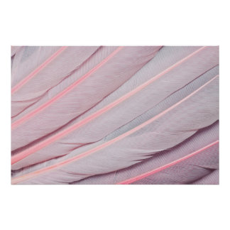 Pink Roseate Spoonbill Feahter Design Poster
