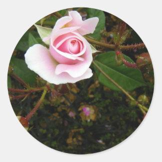 Pink Rosebud Round Stickers