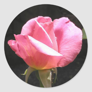 Pink Rosebud Stickers