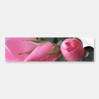 Pink rosebuds bumper sticker