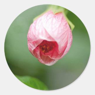 pink Rosebuds Round Sticker