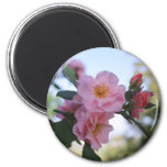 Pink Roses 6 Cm Round Magnet