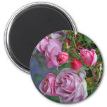Pink roses and rosebuds 6 cm round magnet