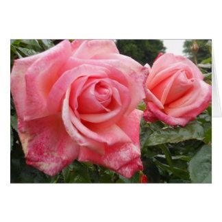 Pink roses, Belfast Botanic Garden, NI Card