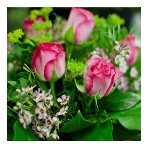 Pink Roses Bouquet Print
