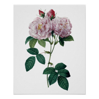 Pink roses by Redoute premium quality print