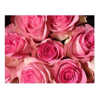 Pink Roses Flower Postcard