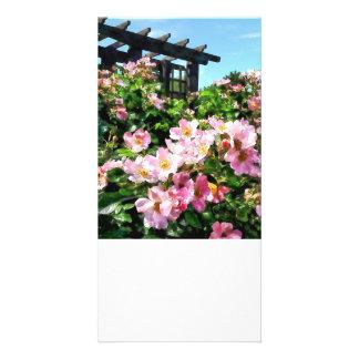 Pink Roses Near Trellis Photo Cards