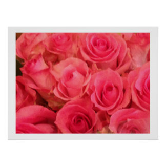Pink Roses Photo Poster