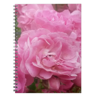 Pink Roses Photograph Spiral Note Book